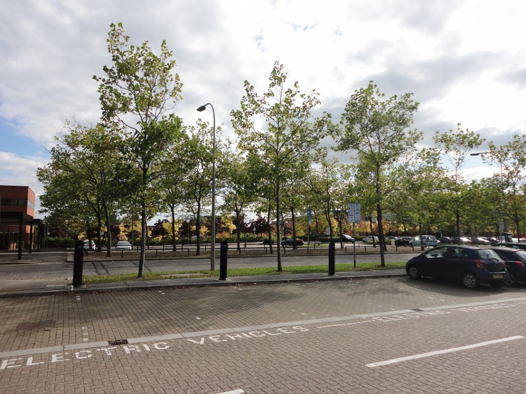 Milton Keynes road with trees